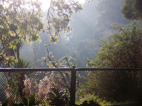 Evening Light, Govt Botanical Gardens, Ooty