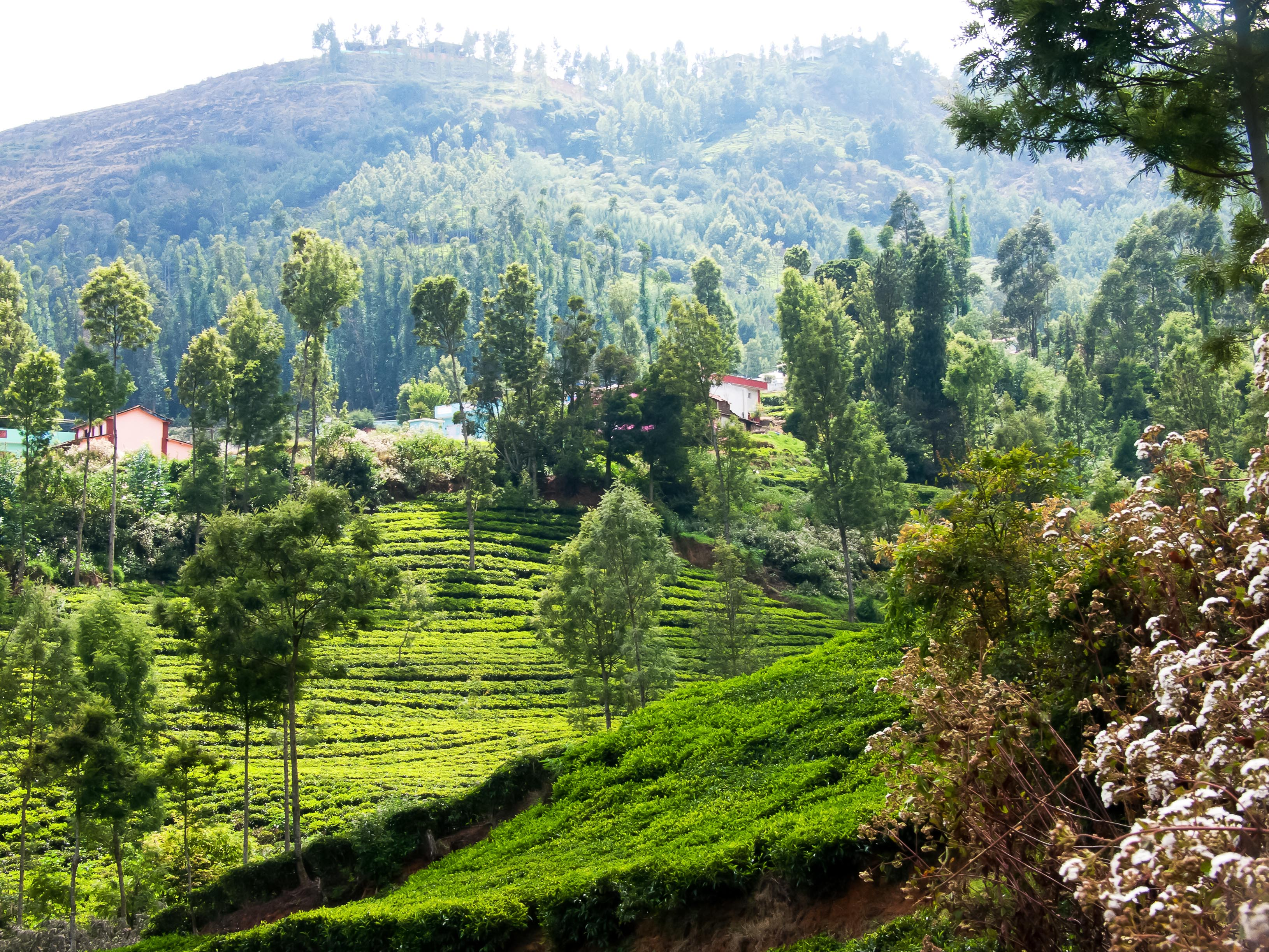 Kerada Village near Lovedale, Ooty