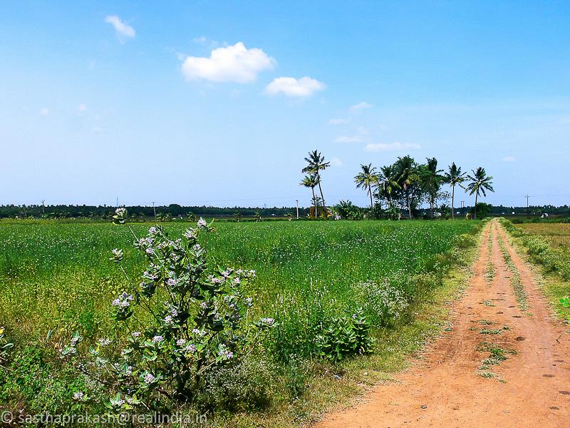 Thingalur Village